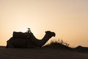 Kameel in de woestijn van