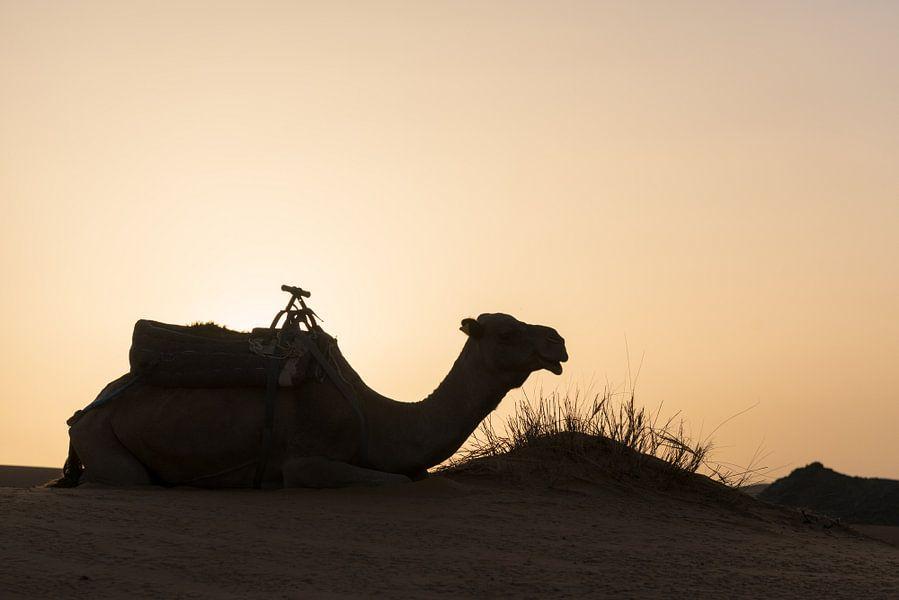 Kameel in de woestijn van Herwin Wielink