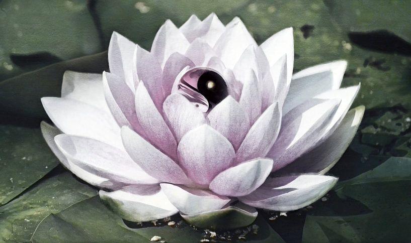 Yin Yang Lotus Flower van Jacky Gerritsen