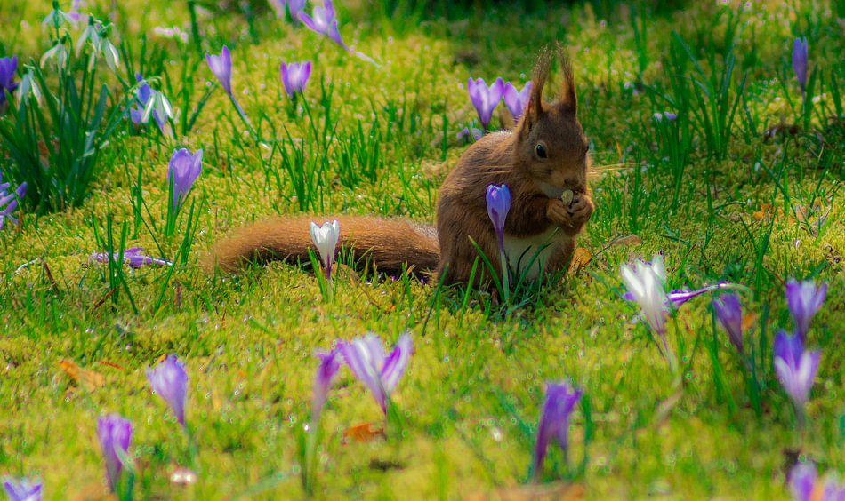 Eekhoorn in de Lente
