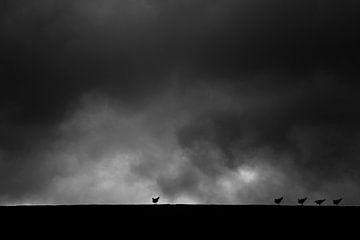Meeuwen in de Storm van Vincent van den Hurk