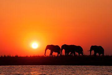 Afrikaanse zonsondergang Botswana von Lotje Hondius
