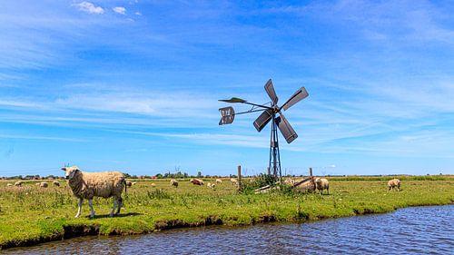 Zonnig polderlandschap met blauwe lucht, schapen en klassieke windmolen.