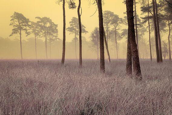 Artistiek naaldbos in de mist met helmgras
