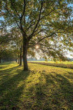 Zonnige herfstkleuren von Moetwil en van Dijk - Fotografie
