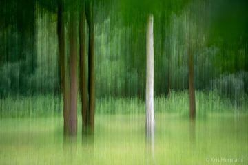 Bewogen bos 2 van Kris Hermans