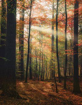 Farben ändern von Joris Pannemans - Loris Photography