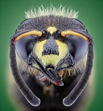 Sluipwesp / parasitic wasp van marco jongsma