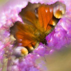 La beauté colorée du papillon paon sur Arjan van de Logt