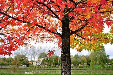 De rode boom van Corinne Welp
