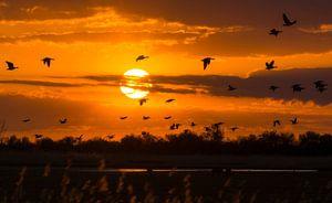 In vogelvlucht langs de zon