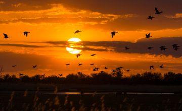 In vogelvlucht langs de zon sur Xander Haenen