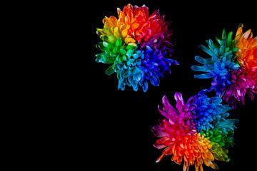 Regenbogen der Blumen von Anouk Pross