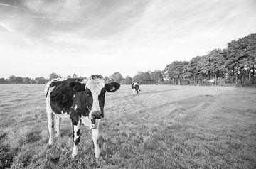 Koe in Nederlands weiland (zwart-wit) van Kaj Hendriks
