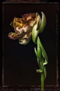 Alte Blumen 13 von Henk Leijen