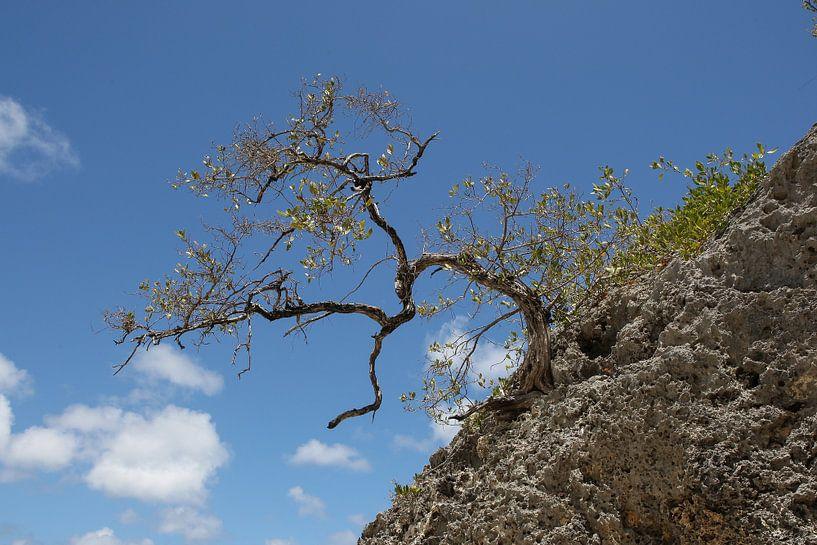 boompje op een rots van Frans Versteden