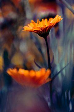 Scattered-Color van Hiske Boon