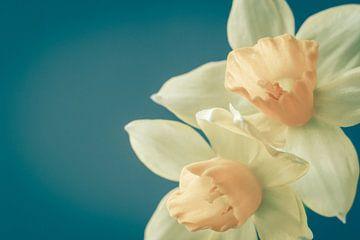 Narcissen in lentesfeer van Maaike Zaal