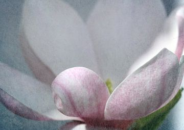 Magnolie3 van Roswitha Lorz