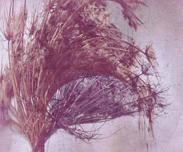 SEED STAND - abstract, van Christine Nöhmeier