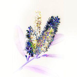 fleur subtile #02