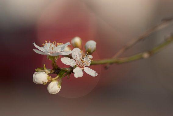 Sweet blossom (Japanse stijl) van Birgitte Bergman