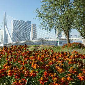 Bloemen in Rotterdam van Michel van Kooten