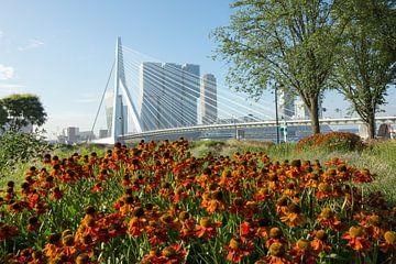 Bloemen in Rotterdam sur Michel van Kooten