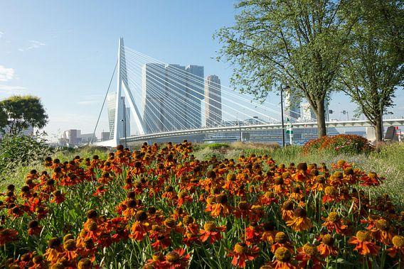 Bloemen in Rotterdam