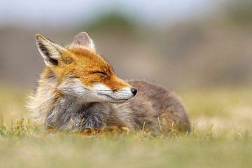 the smiling fox van Daniela Beyer