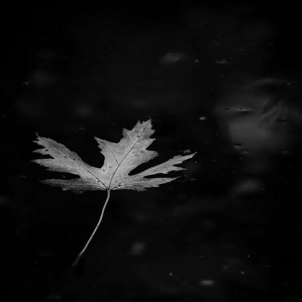 Leaf of life van Dick Nieswaag