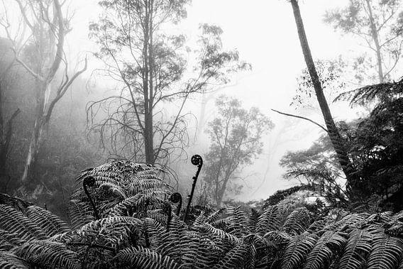 Regenwoud in de mist VIII