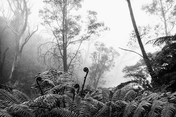 Regenwald im Nebel VIII