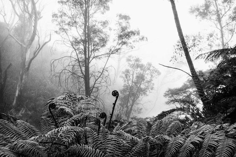 Regenwoud in de mist VIII van Ines van Megen-Thijssen