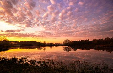Het Kwakvors, Limburg van Jeroen Mikkers