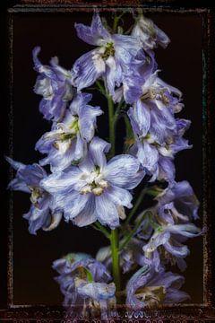 Oude Bloemen 6 van Henk Leijen