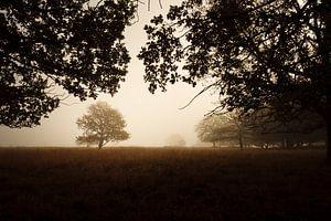 Trees around iron age burial mounds