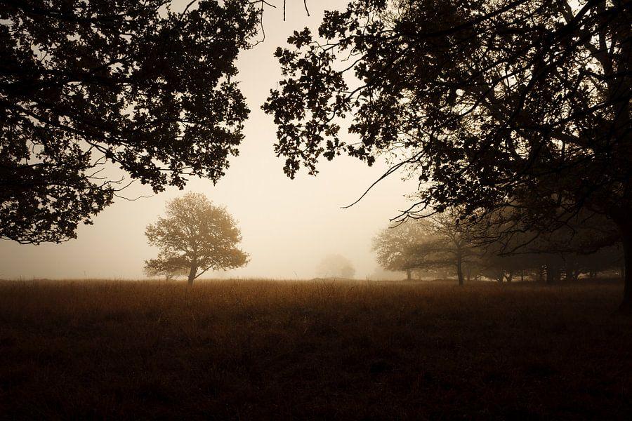 Trees around iron age burial mounds van Luis Fernando Valdés Villarreal Boullosa