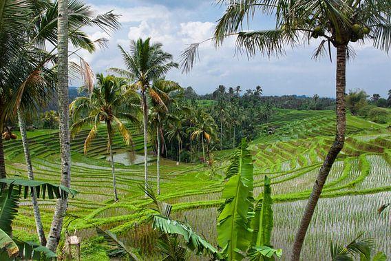 Bali rijstvelden van Jaap van Lenthe