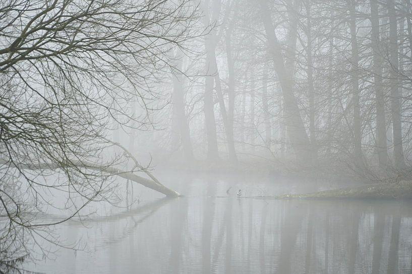 Mistig bos van Karin in't Hout