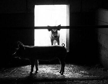 farm van Paul Noordover