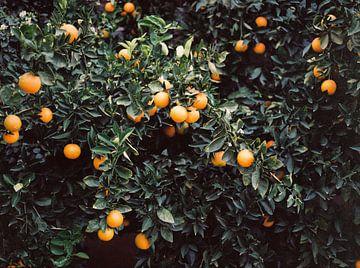 Orangen   Schwermütige bunte Reisefotografie   Botanische grüne Wand mit Orangen von Raisa Zwart
