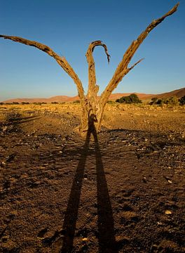 Glücklicher Schatten von Eye to Eye Xperience By Mris & Fred