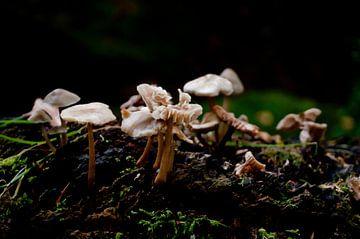 Pilze von Anita van Hengel