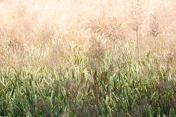 Weizenfeld mit Grasfahnen von Peter de Kievith Fotografie