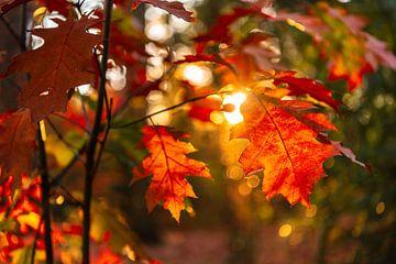 Rood de herfstbladclose-up met bokeh op de achtergrond