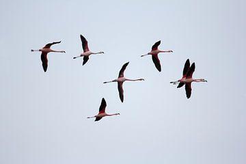 Vliegende flamingo's von Ronald Jansen