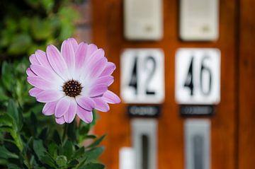 Blume mit Briefkästen im Hintergrund von Dennis  Georgiev