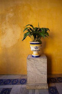 Königlicher Palast Sevilla Real Alcazar von Kees van Dun
