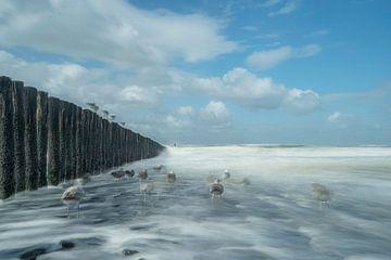Möwen am Meer von Fotografie Gina Heynze